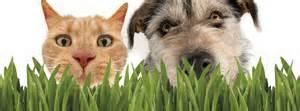 Pet Treats-Pet Greens®